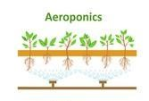 Aeroponics growing system
