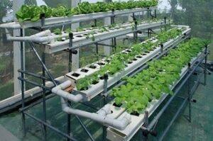 Vertical Farm example (Tech Tyfu)